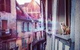 Maestro music today - klassieke muziek voor katten